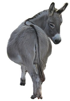 picture of a donkey from the rear